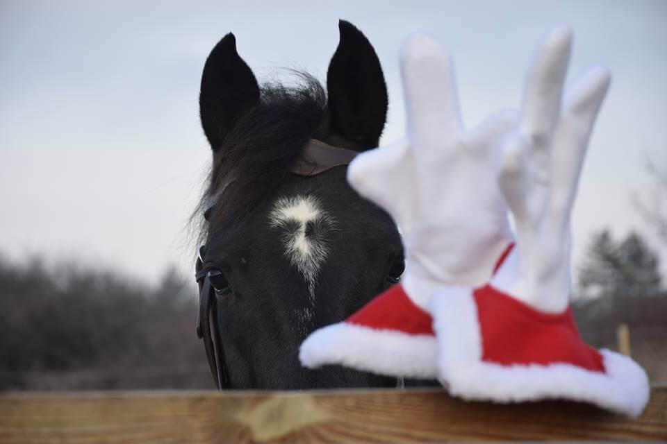 Коледна и Новогодишна промоция