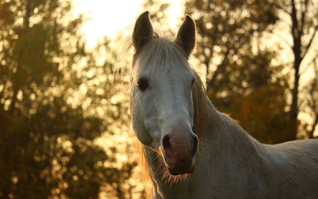 Уроци по лидерство с коне