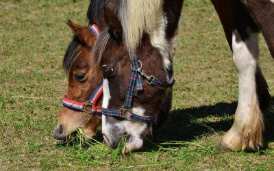 Интервю за Дарик – Ива и Виктор Андрееви – за конете, хората и живота близо до небето